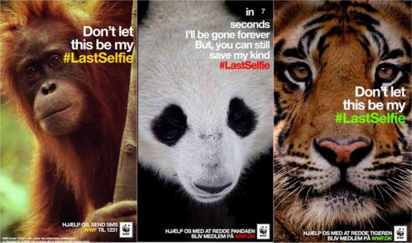 Viddyad-LastSelfie-WWF